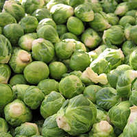 Brussels Sprout Cellular Extract - Brassica oleracea gemmifera