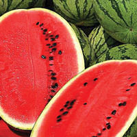 Watermelon Fruit Cellular Extract - Citrullus lanatus