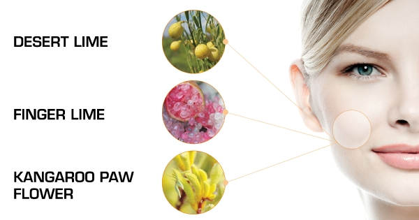 Ingredient In Focus Ferulic Acid Packing A Powerful Antioxidant Punch Australian Native Extracts